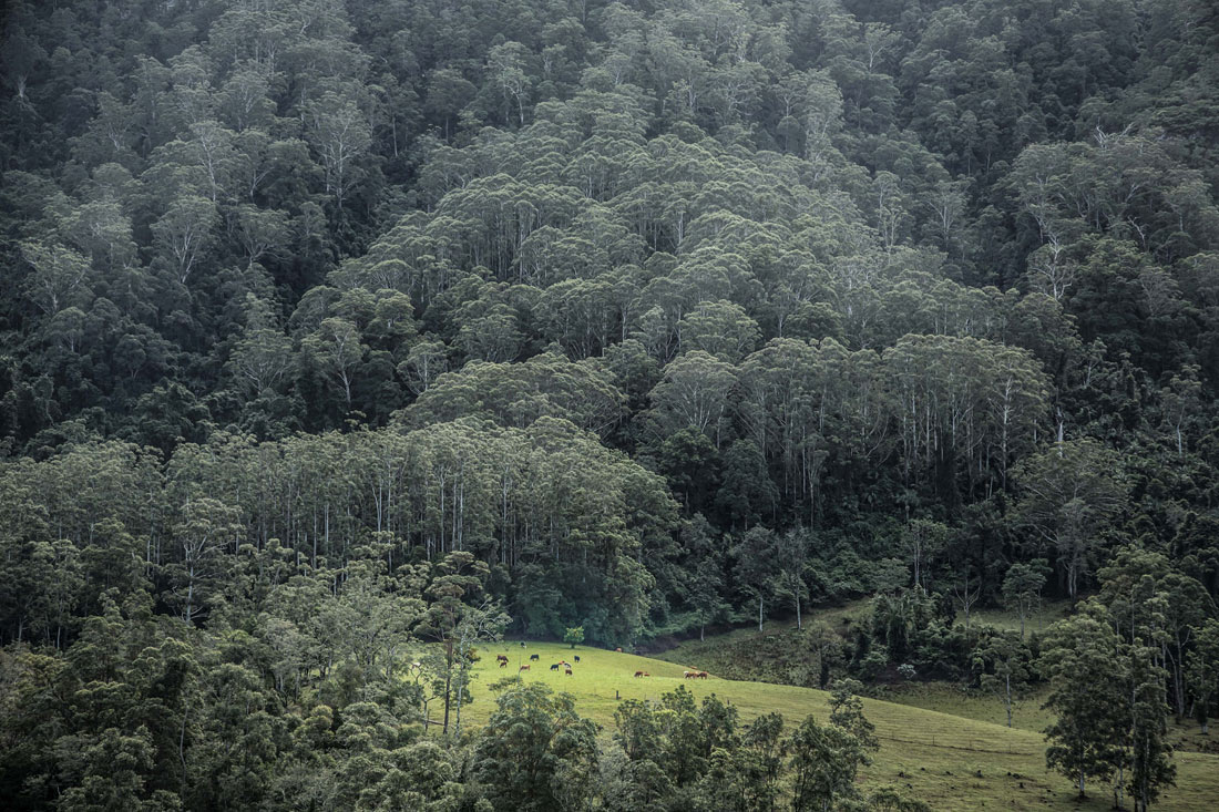 Rolling pasture and impressive forest (Photo: Ken Spence)